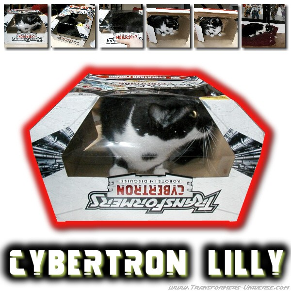 Cybertron Lilly